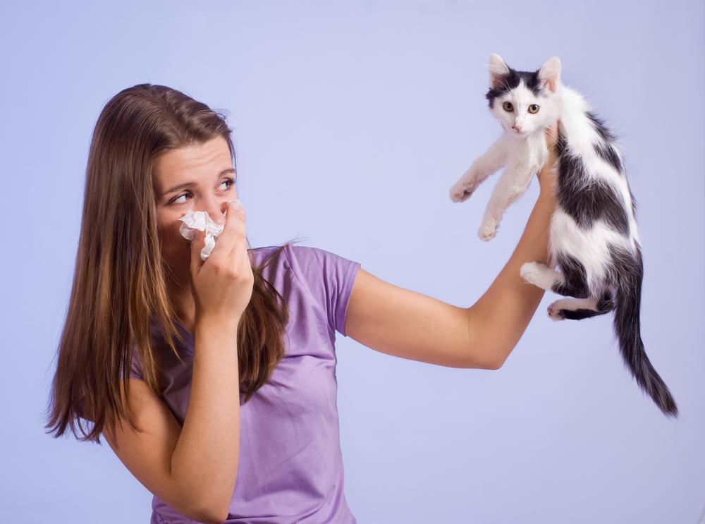 Аллергия на кошачью шерсть симптомы лечение